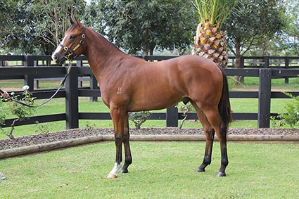 Magic Millions Thoroughbred Horses