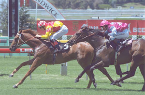 Magic Marvo - Royal Randwick on 26th January 2002
