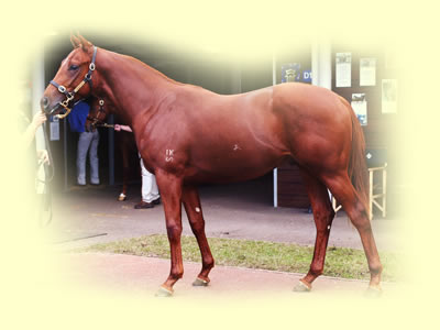 Chestnut Colt - Woodman-Review(NZ) by Star Way(GB)