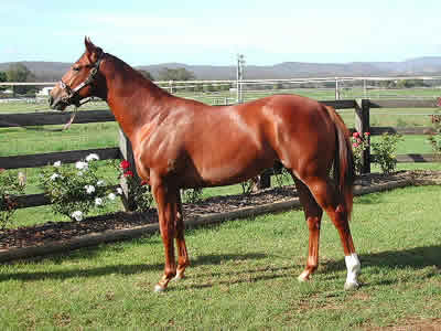 Lot 134 Classic 2003 Sale - SOLD for AUD$70,000